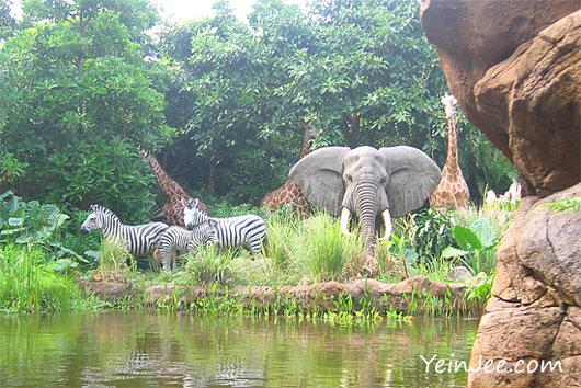 Hong Kong Disneyland Jungle Cruise