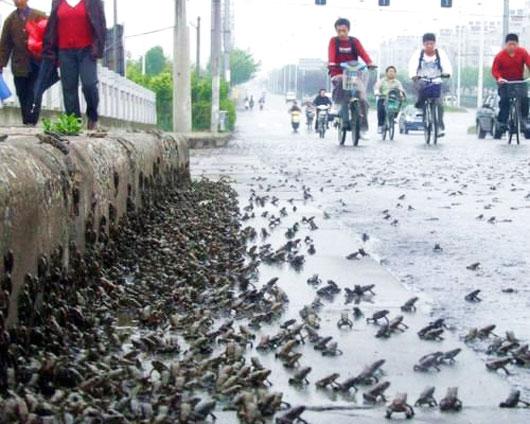 Mass toad migration in Jiangsu, China