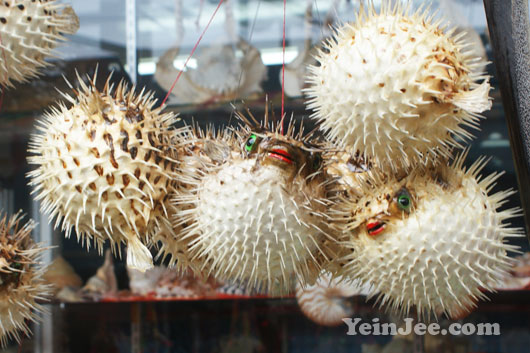 Puffer fish samples in Suao, Taiwan