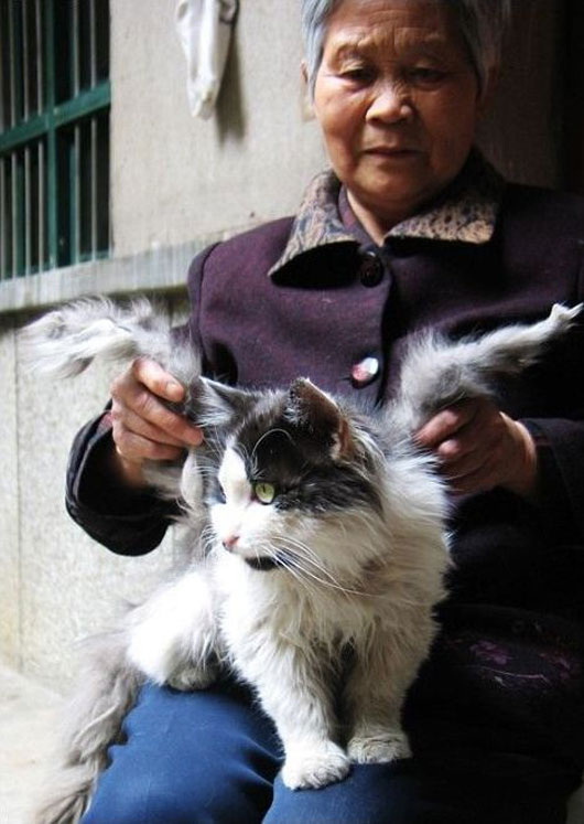 Chinese cats grow wings in Sichuan province