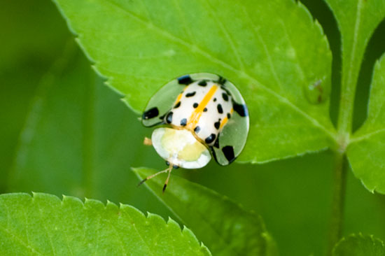 Picture of a cute bug in Taiwan