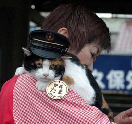 Tama the stationmaster cat in Japan