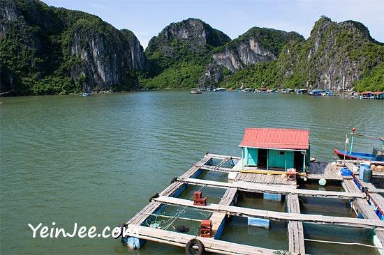 Floating fishing farm at Halong Bay, Vietnam