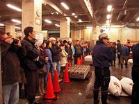 Picture of morning tuna auction at Tsukiji Fish Market in Tokyo, Japan