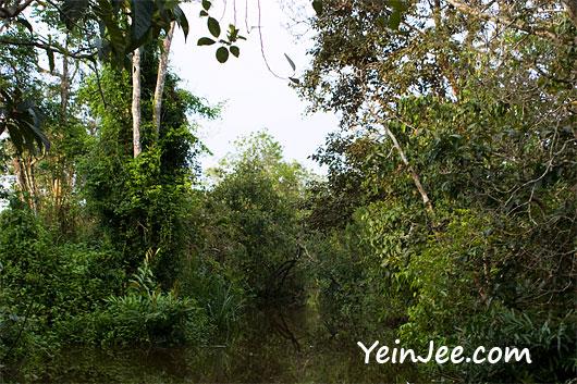 Klias Wetland in Sabah, Malaysia