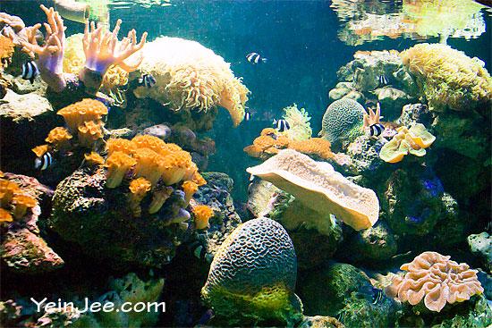 Coral tank at Underwater World Langkawi, Malaysia