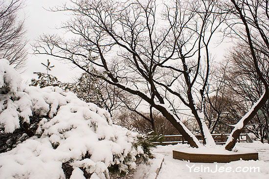 Namsan Park in snow, Seoul, South Korea