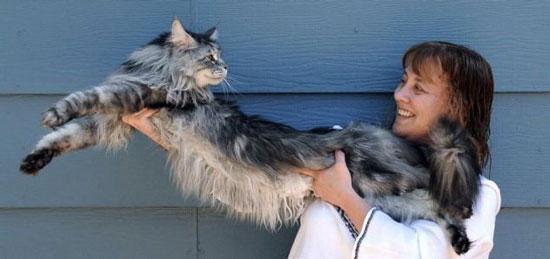 World longest cat