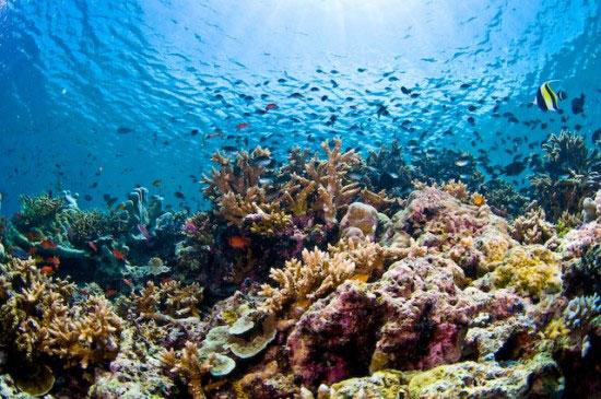 Oil rig turns hotel scuba diving centre in malaysia - Sipadan dive sites ...