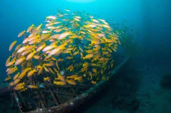 Malaysia Sipadan dive site