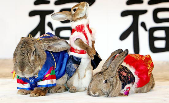 Korean rabbits celebrate New Year 2011