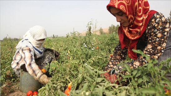 Tajik farmers