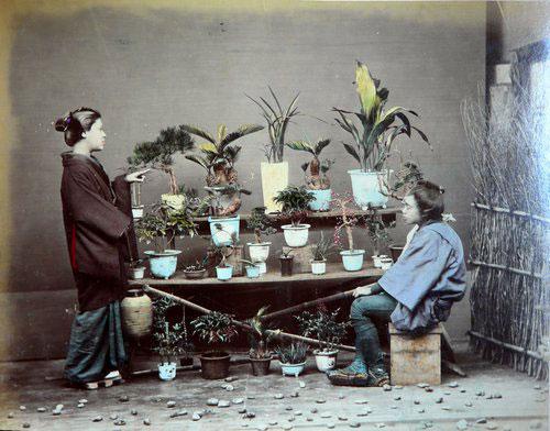 Adolfo Farsari vintage Japanese bonsai