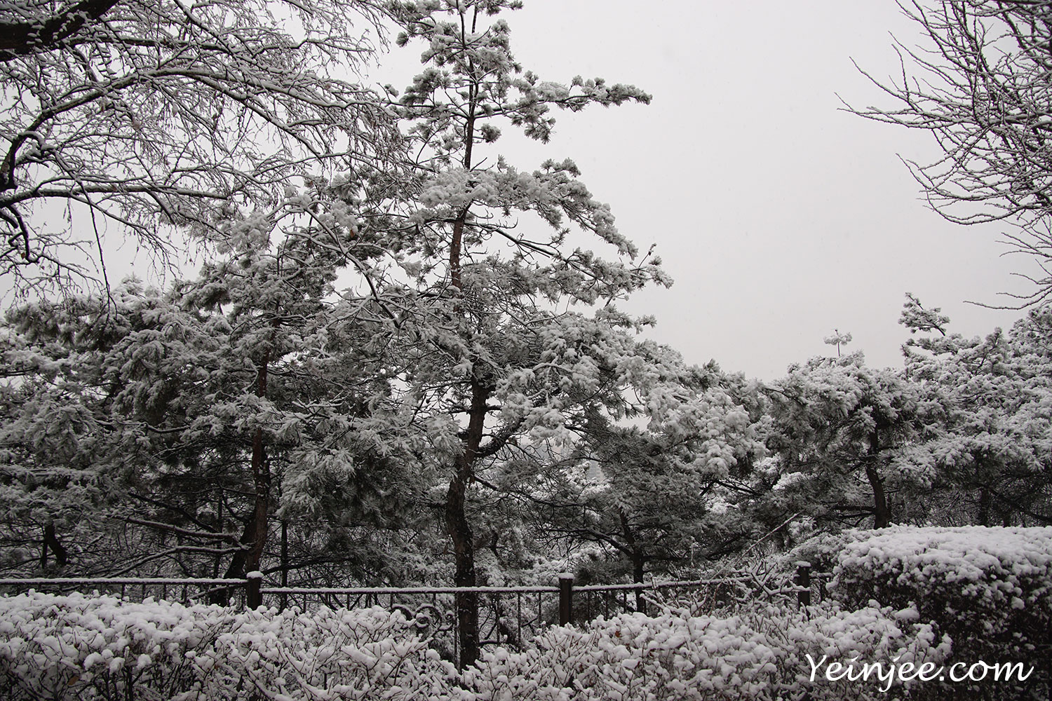 Snow sceneries Seoul Korea